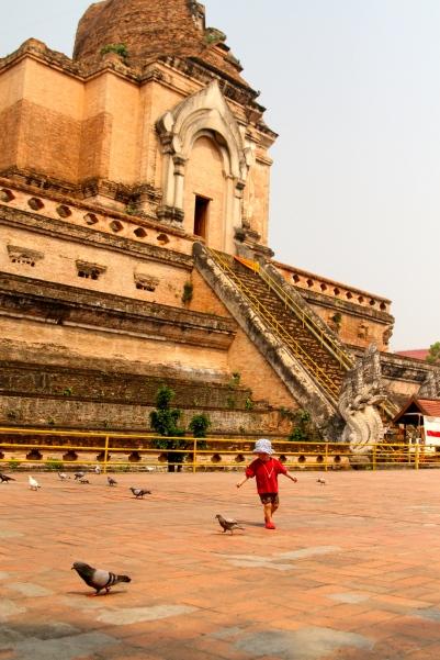 Chasing pigeons at Wat Chedi Luang