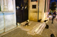 A few of the many cats of Istanbul
