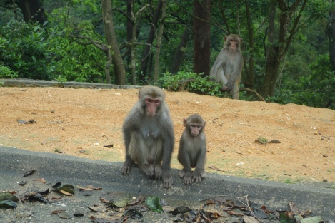 Monkeys in Kam Shan Country Park _ expatlingo.com