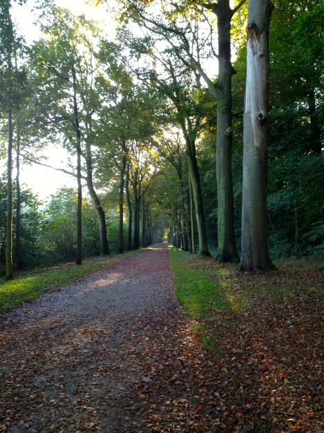 Forested area of Amelisweerd.