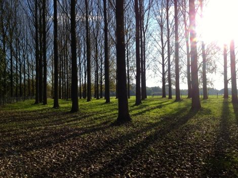 Mid-way through the run, I'm seduced down a new path and find this stand of bare trees.