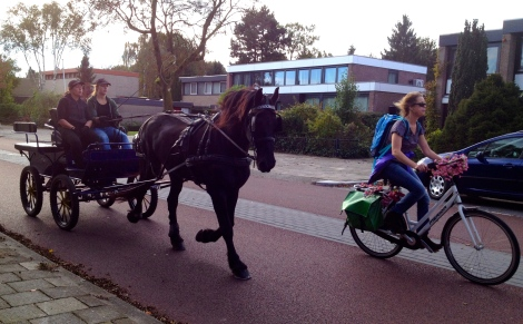 And sometimes cars and bikes must give priority to horses. Rather fun to run along side a horse for half a kilometer!